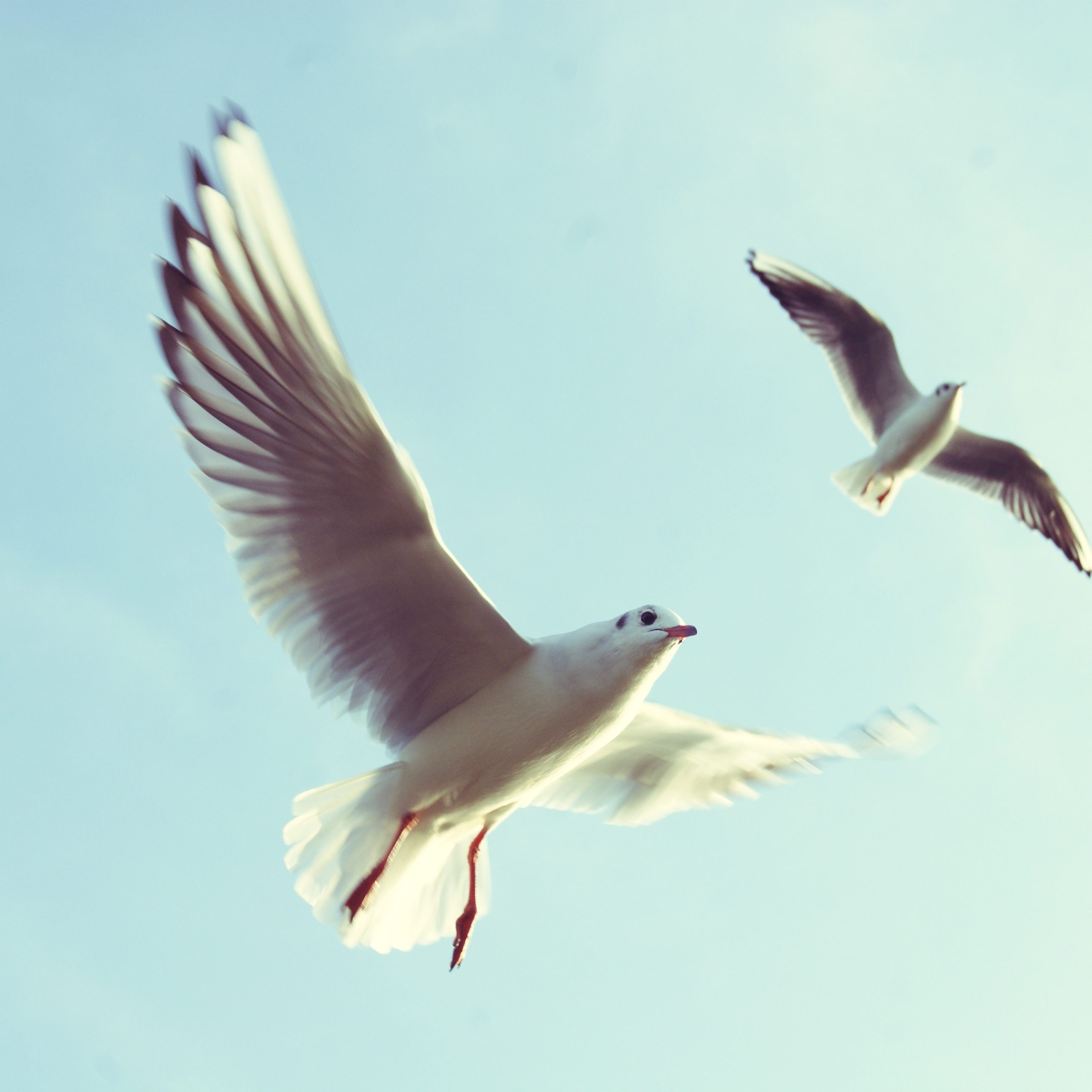 sky-flying-animals-birds